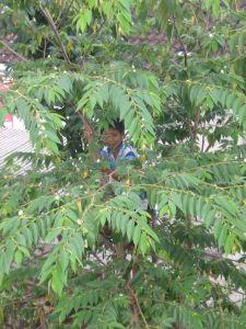 Seorang Bocah Tengah Memanjat Pohon