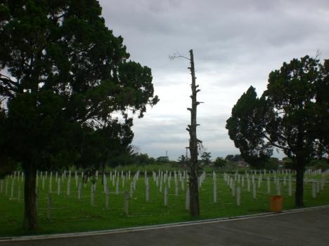 Pohon Gundul Diantara Subur