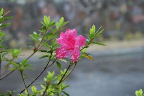 Bunga Entah Apa Namanya